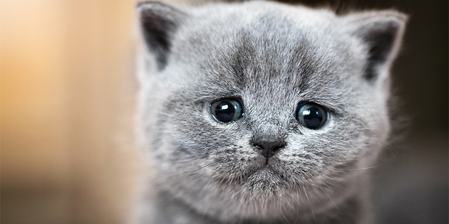 El gato más adorable