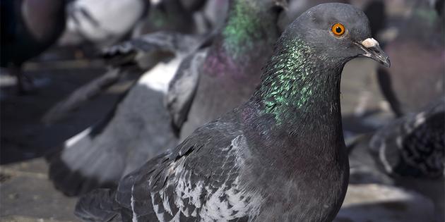 ¡La paloma más tierna!