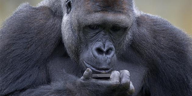 El gorila del amor