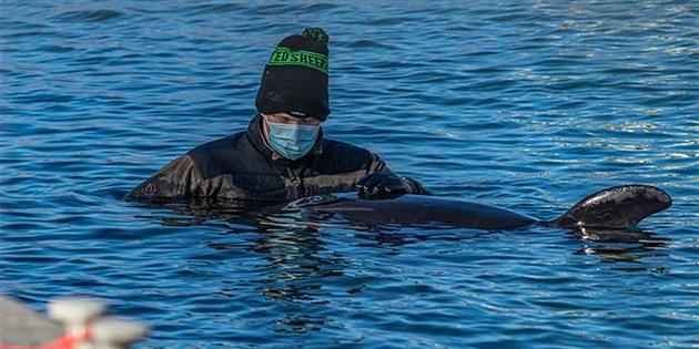 El llanto de la orca